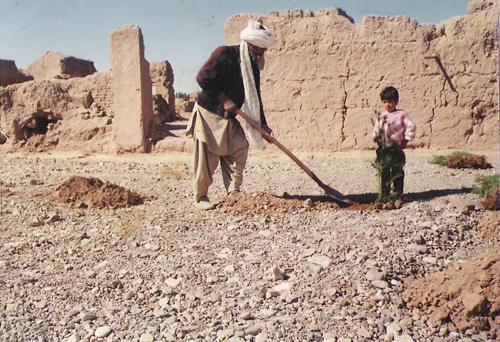 تصاویری از هرات